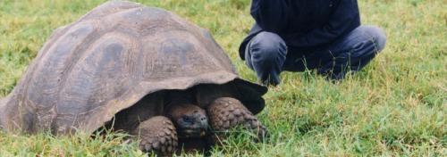 צבי ענק מגלפאגוס