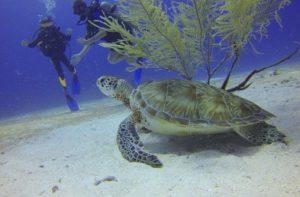אתרי צלילה בעולם, רשימה