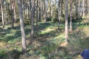 שביל הרקפות הסמוך לפארק רבין במגדל העמק