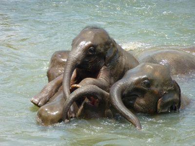 טיול בסרי לנקה - פילים בנהר